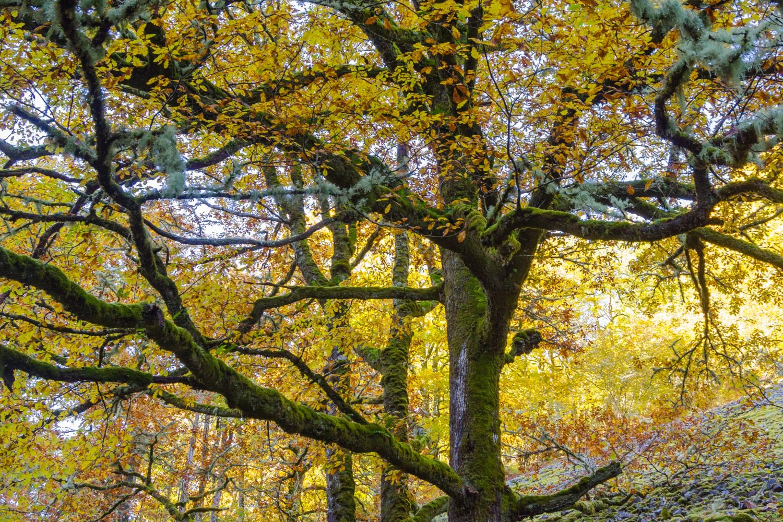 Asturias bosque/vmoute